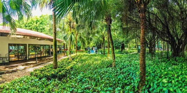 """""""Nhà mẫu Sky Oasis được xây dựng trong công viên Mùa Xuân với không gian tràn ngập cây xanh. Tại khu đô thị này, tất cả các công trường xây dựng, nhà mẫu hay văn phòng đều được bao quanh bởi các rừng cây rộng mênh mông. Đây là điểm đặc biệt tại Ecopark mà không có bất cứ khu đô thị nào có được"""" - Chị Nguyễn Linh, một khách hàng thân quen của Ecopark cho biết."""