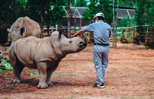 Kỷ lục 4 tê giác con chào đời trong vòng 16 tháng tại Vinpearl Safari - Ảnh 4
