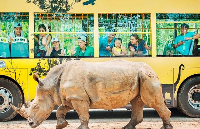 Kỷ lục 4 tê giác con chào đời trong vòng 16 tháng tại Vinpearl Safari - Ảnh 8