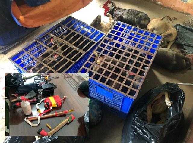 Số chó bắt trộm và dụng cụ gây án.