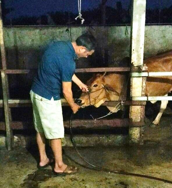 U60 Phan Thanh Tĩnh bị bắt quả tang khiđang bơm nước vào miệng bò.