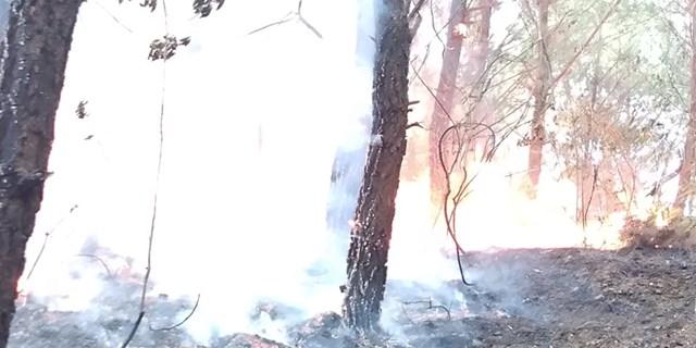 Ngọn lửa bùng phát từ tàn tro đêm qua.