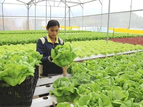 Lao động sang Hàn Quốc làm việc thời vụ chủ yếu trong lĩnh vực nông nghiệp.
