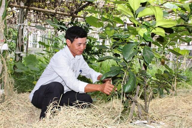 Trưởng thôn Hoàng Quang Vinh tiên phong xây dựng vườn mẫu đạt chuẩn.