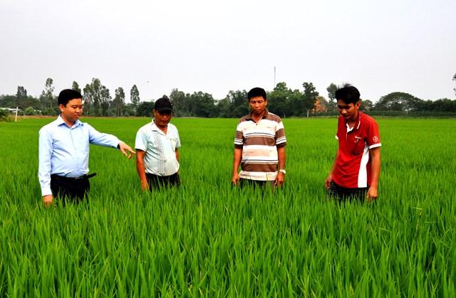 Cán bộ nông nghiệp hướng dẫn người dân làm lúa sạch.