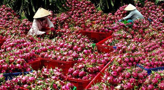 Thanh long là một trong 9 loại trái cây được xuất khẩu sang Trung Quốc.