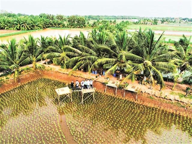 Một điểm du lịch sinh thái - cộng đồng trên Cồn Chim, huyện Châu Thành, tỉnh Trà Vinh.