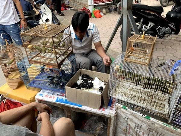 Cảnh mua bán tấp nận tại chợ chim.