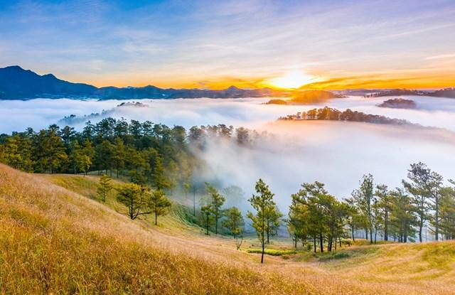"""Đà Lạt """"đốn tim"""" du khách khi mang trong mình đầy nét lãng mạn của những rừng thông rợp bóng ngút ngàn (Ảnh: Shuterstock – by Lu Quyen)."""