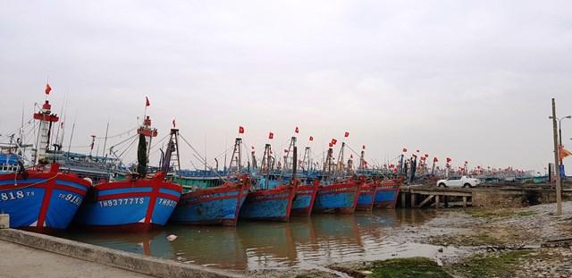 Các tàu thuyền của ngư dân Thanh Hóa vào nơi tránh trú bão an toàn.