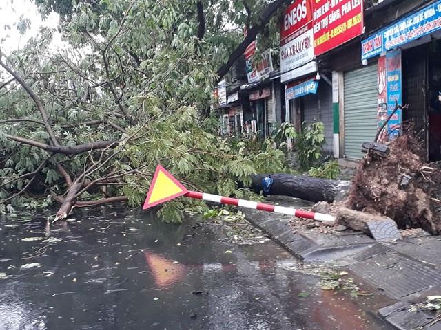 Nhiều cây xanh trên các tuyến đường thành phố Huế gãy đổ chắn ngang lối đi.