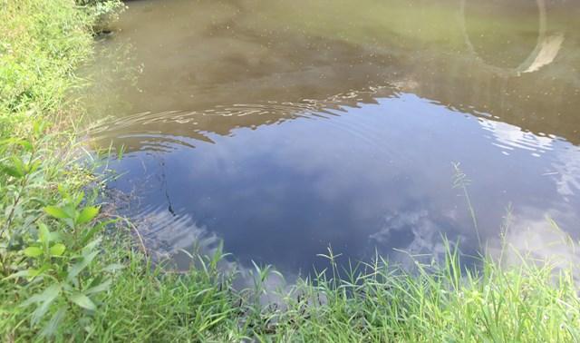 Các kênh mương gần CCN Đồng Dinh nước đen kịt.