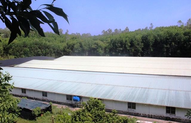 Một góc trang trại nuôi heo ở thôn Lý Trường