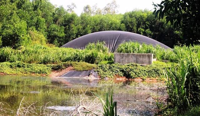 Nước thải trang trại nuôi heo chảy ra hồ chứa
