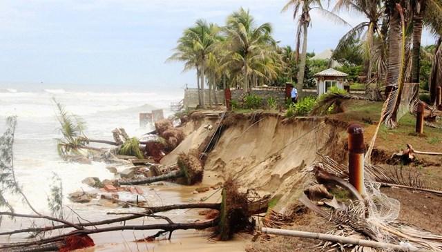 Đoạn bờ biển ở phường Cẩm An sạt lở nghiêm trọng.