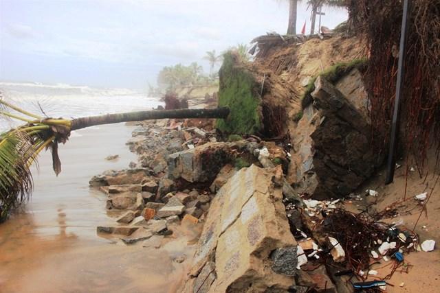 Các bờ kè đá, cây cối bị sạt ngã đổ xuống biển.