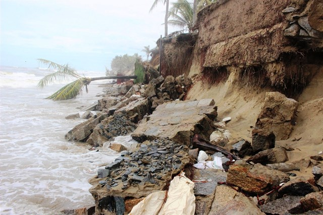 Một đoạn bờ biển ở phường Cẩm An sạt lở nặng.