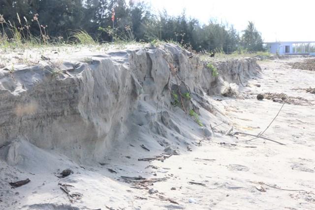 Đã có hơn 500m bờ biển thôn Trung Phường sạt lở nặng.