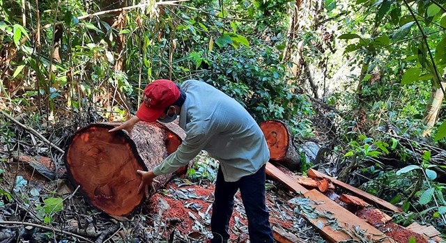 Một vụ phá rừng ở thượng nguồn Quảng Nam.