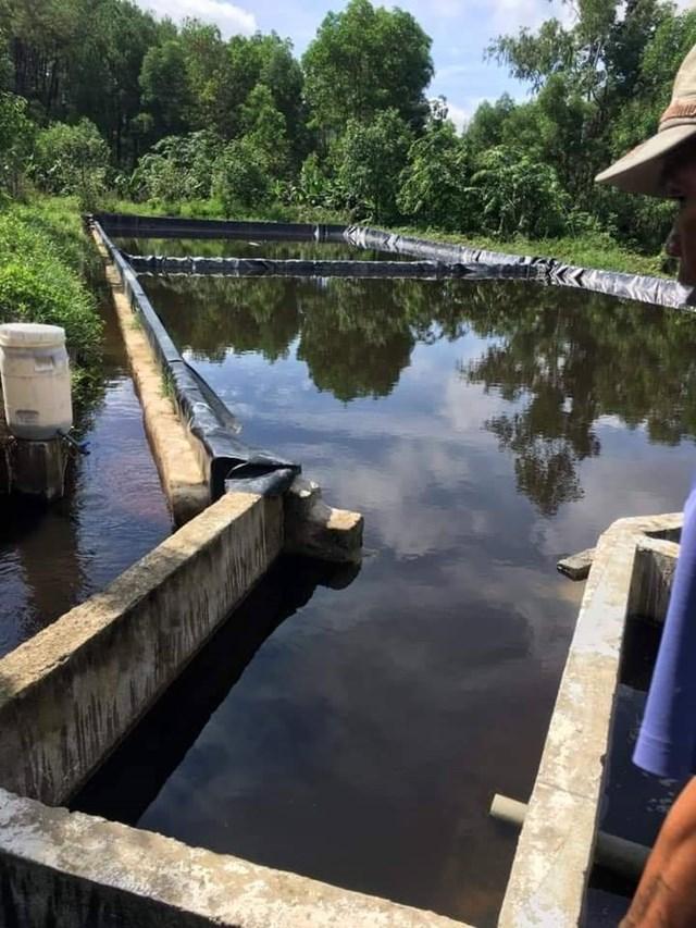 Hệ thống bể lắng của trang trại màu nước cũng đen sì, từ bể lắng này xả thẳng ra môi trường (Ảnh: Điền Bắc).