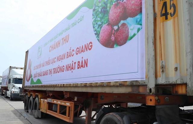 Lô hàng vải thiều đầu tiên của Việt Nam đã có mặt tại thị trường Nhật Bản. (Ảnh: Thống Nhất/TTXVN).