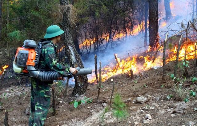 Các lực lượng chức năng nỗ lực dập lửa tại xã Diễn Lợi, huyện Diễn Châu (Nghệ An). (Ảnh: Tá Chuyên/TTXVN).