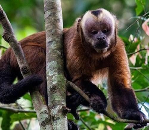 Sống và chết trong rừng rậm Amazon - Ảnh 1