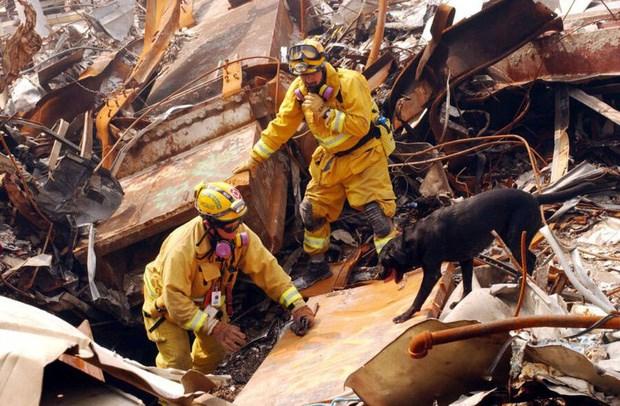 Mike Scott thuộc lực lượng Đặc nhiệm số 8 California và chú chó của anh - Billy đang tìm kiếm những người còn sống hoặc các nạn nhân đã thiệt mạng trong đống đổ nát của Trung tâm Thương mại Thế giới ngày 21/9/2001, 10 ngày sau vụ tấn công.Ảnh: Allthatsinteresting.