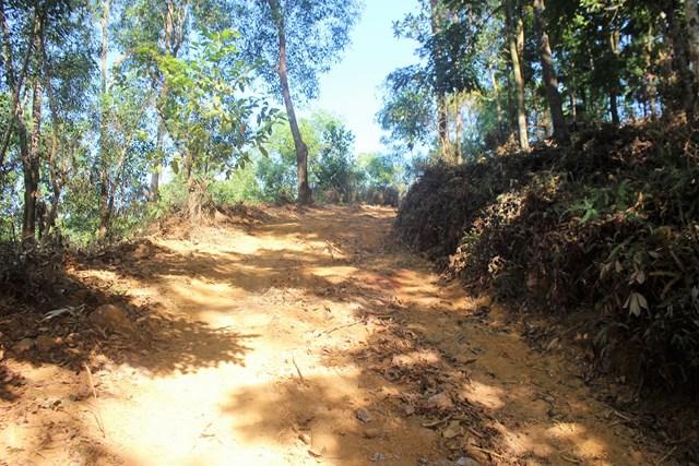 Mở đường đất rộng vào sâu trong rừng phòng hộ.