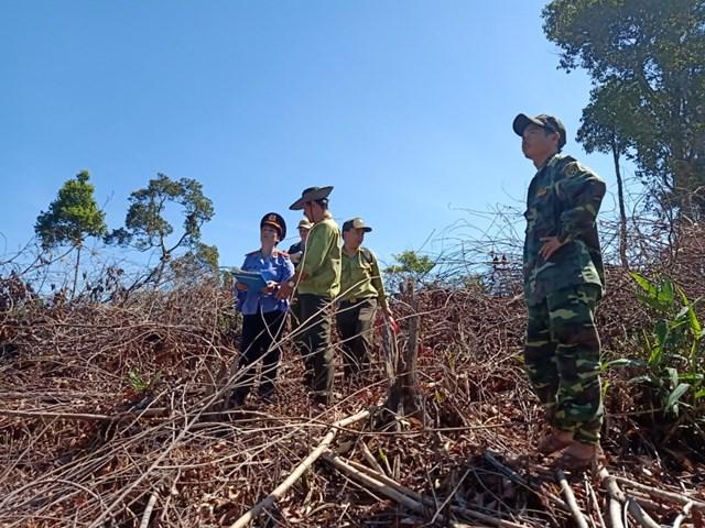 Lực lượng chức năng kiểm tra vụ phá rừng xã Trà Giác.