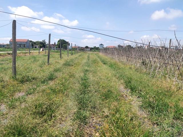 10.000m2 đất dự án nông nghiệp công nghệ cao giờ chỉ còn trơ trụi những chiếc cọc bê tông.