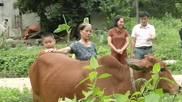 Một gia đình ở xóm Chùa, xã Bình Long, huyện Võ Nhai được nhận hỗ trợ từ mô hình nhân rộng nuôi bò cái sinh sản.