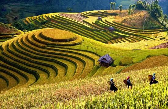 Cảnh tượng hùng vĩ, tươi đẹp của ruộng lúa bậc thang ở Mù Cang Chải.