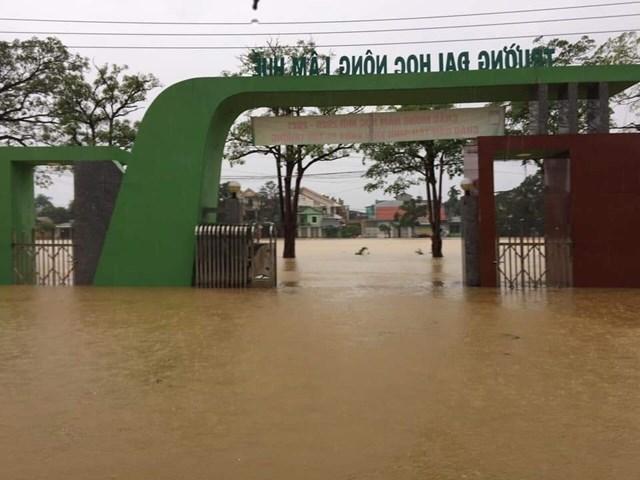 Trường ĐH Nông Lâm ngập sâu trong lũ.