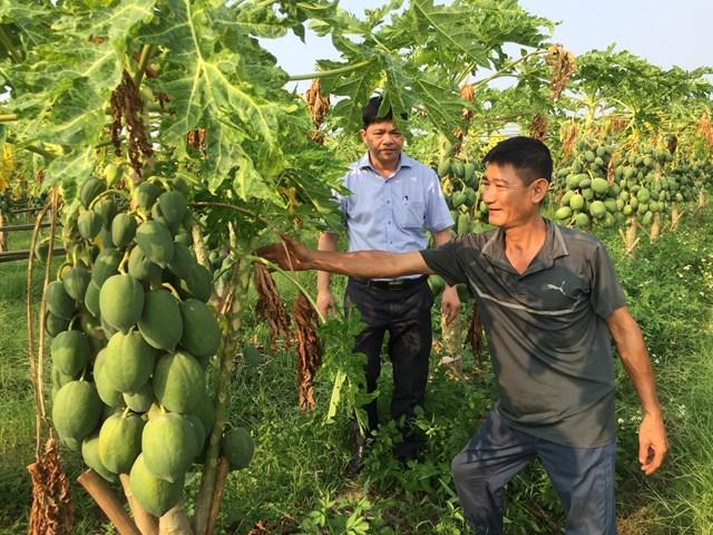 Anh Nguyễn Đăng Quý giới thiệu về mô hình sản xuất rau công nghệ cao của gia đình.