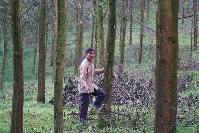 Cơ chế tín chỉ cac-bon được triển khai trên diện rộng sẽ góp phần bảo vệ, phát triển rừng bền vững.